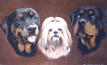 Rottweilers and Shih Tzu